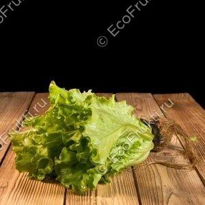 salat-premium-v-gorshochke-1-sht
