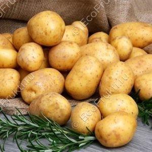 Картофель Невский 1 кг.